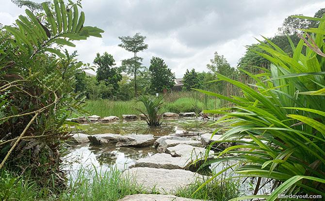 Junior Wetland trail