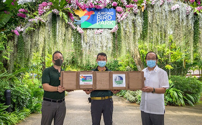 His Excellency Joseph del Mar Yap, Ambassador of the Republic of the Philippines to Singapore (right) receiving the transport crate from Mathias Quek, Junior Animal Care Officer, Jurong Bird Park (centre) and Dr Luis Neves, Director of Zoology, Wildlife Reserves Singapore (left) as a symbolic gesture to mark the official handover of the Luzon bleeding-hearts to the Philippines.