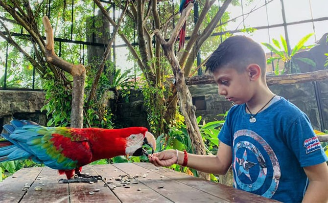 Bird feeding at Butterfly Park and Insect Kingdom
