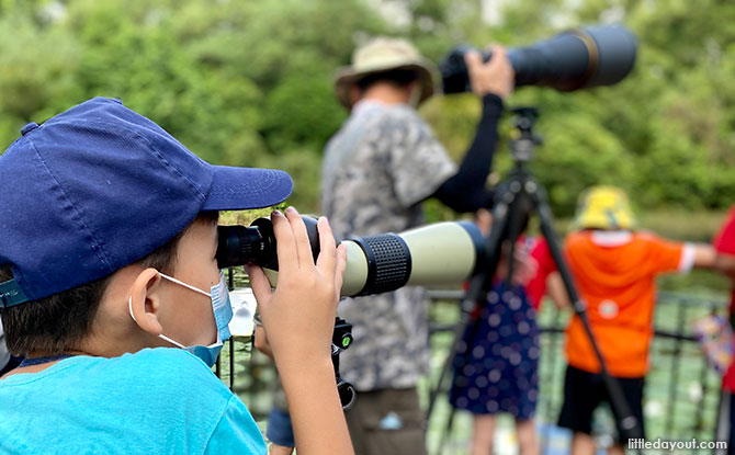 Bird-watching with Birding SG