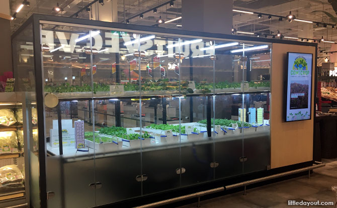 Indoor Vegetable Farm at FairPrice Xtra