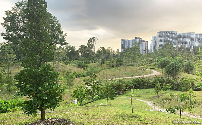 Parks In Singapore Are Reopening Facilities From 19 June. Here Are Some Useful Things To Know
