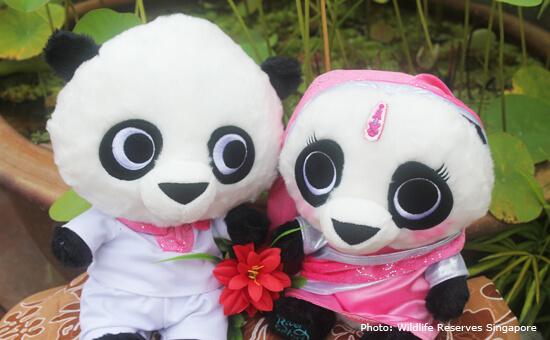 Panda Plush Toys