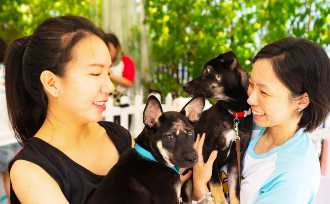 Free Pet Health Checkups at Pets' Day Out 2021