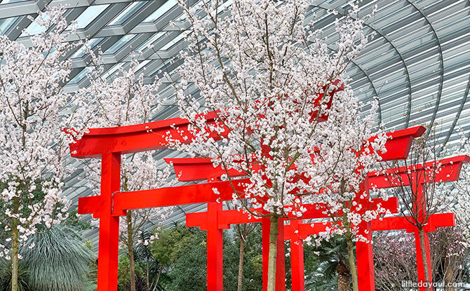 Sakura Matsuri 2020 At Gardens By The Bay: Pink Blossoms & The Peach Boy