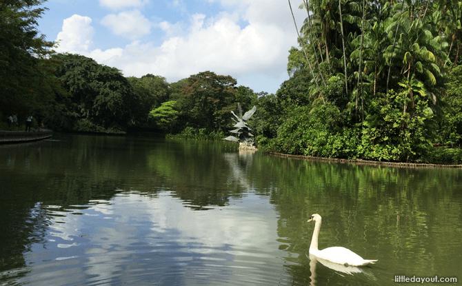 Swan Lake - Timmy & Tammy-inspired Walk