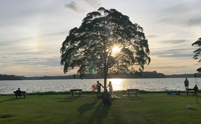 Upper Seletar Reservoir Park Tree