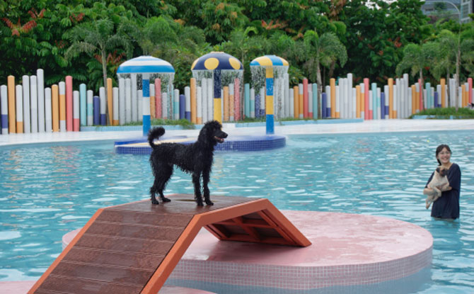 Dog Water Park in Singapore
