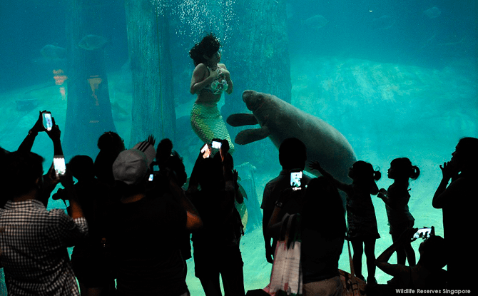 Mermaids at Safari Boo