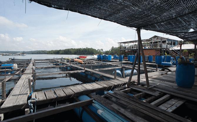 Fish Farm at Pulau Ubin