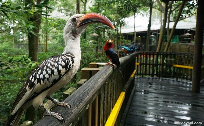 African Treetops, Jurong Bird Park