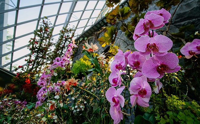 Nurses Enjoy Free Entry To Cooled Conservatories & Dale Chihuly: Glass In Bloom This August 2021