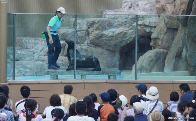 Animal shows at Sunshine Aquarium