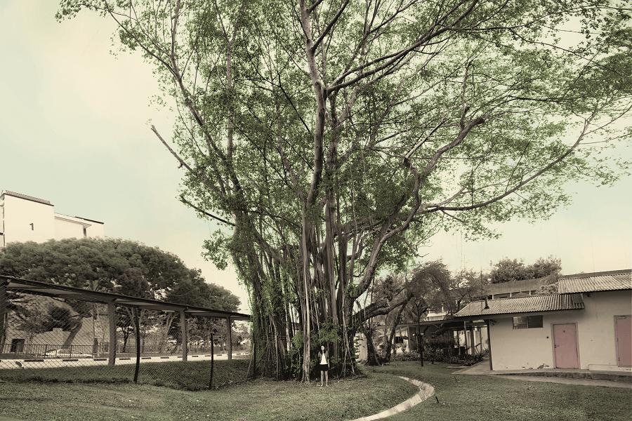 Very Old Tree Exhibit