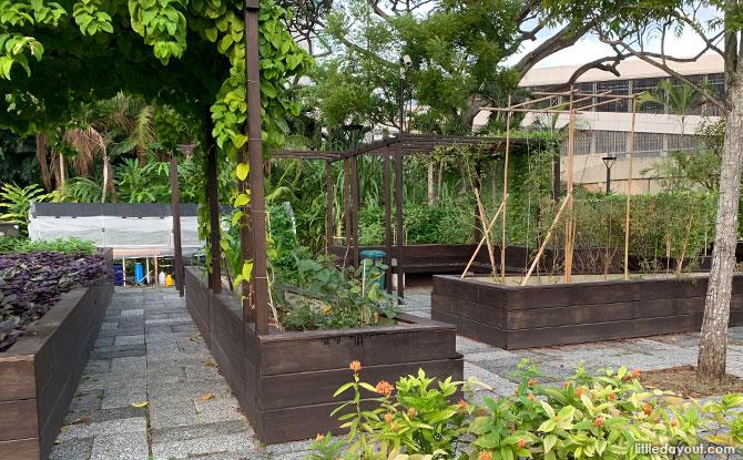 Fruit & Vegetation Cultivation Plot at Active Garden