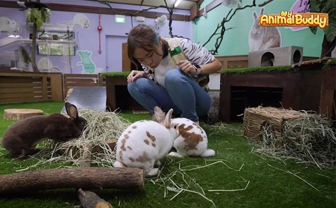 Animal Buddy Program live rabbits