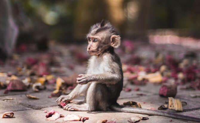 Sacred Ubud Monkey Forest Sanctuary - Visiting Bali with Kids