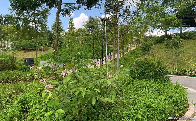 Greenery at Bukit Gombak