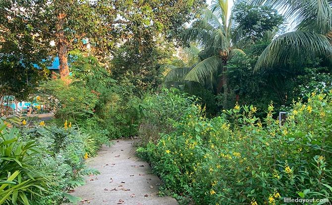 Bukit Panjang Butterfly Garden: Neighbourhood Green Spot At Petir Road