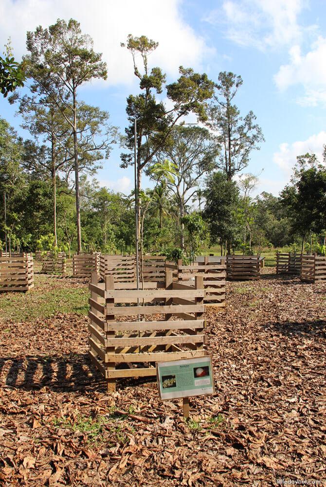 Ubin Fruit Orchard
