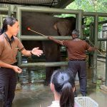 We Got To See How Elephants Are Cared For At The Gentle Giants Wildlife Tour A Singapore Zoo