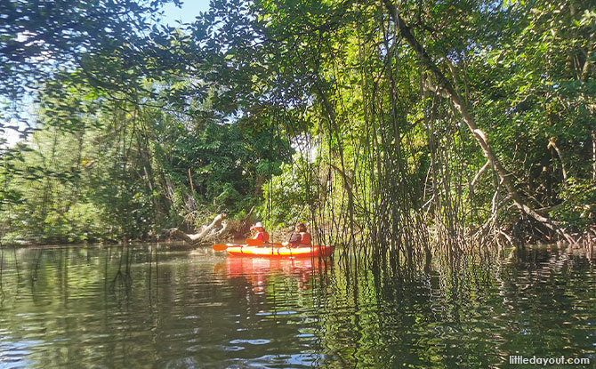 Be wowed by the serenity of the mangroves