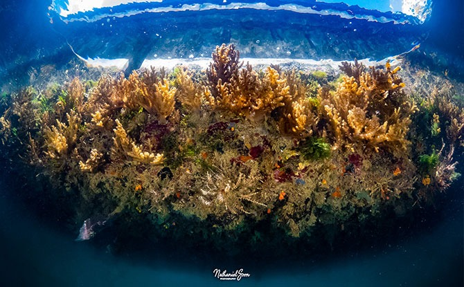 The Various Kinds of Marine Life to See