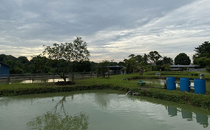 Qian Hu Fish Farm overview