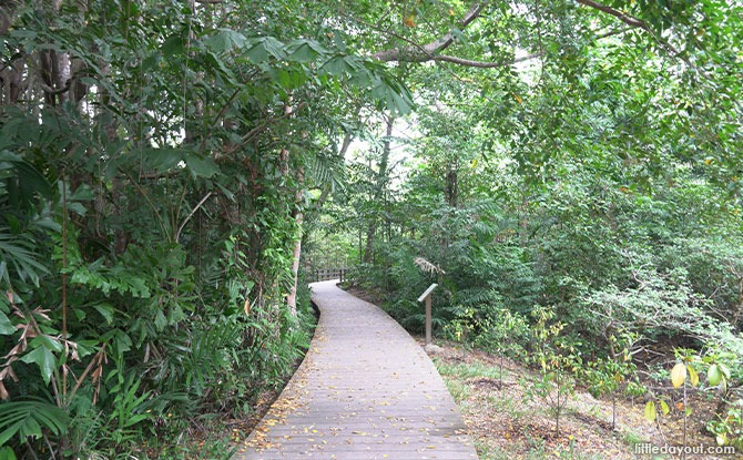 Pasir Ris Mangrove And Board Walk