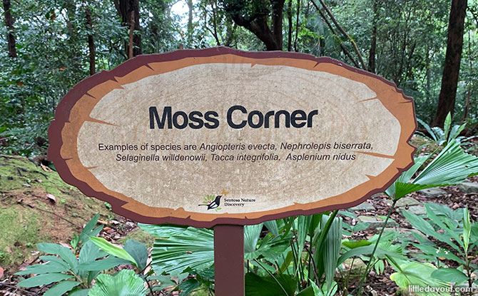 Moss Corner