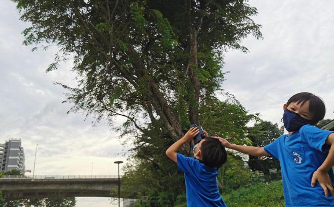 5. Birdwatching