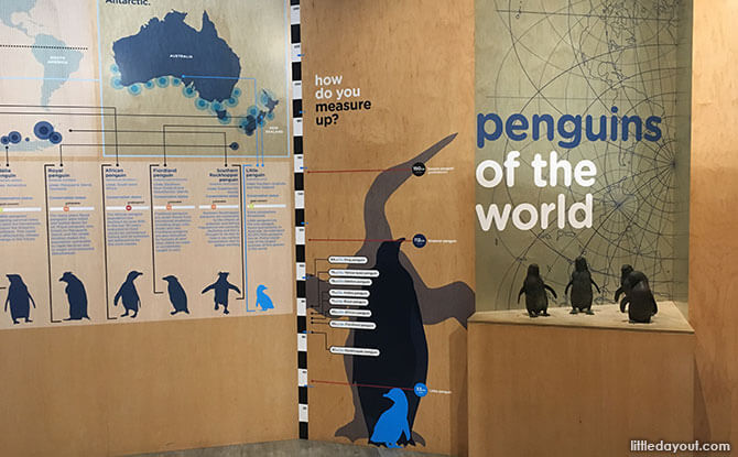 Penguin exhibit within the Philip Island penguin visitor centre