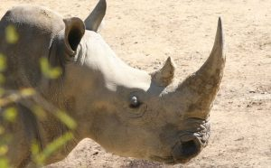 world-rhino-day