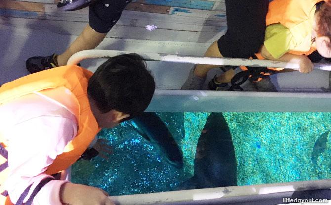 Looking down at the marine life from the glass bottom boat at Sea Life Bangkok