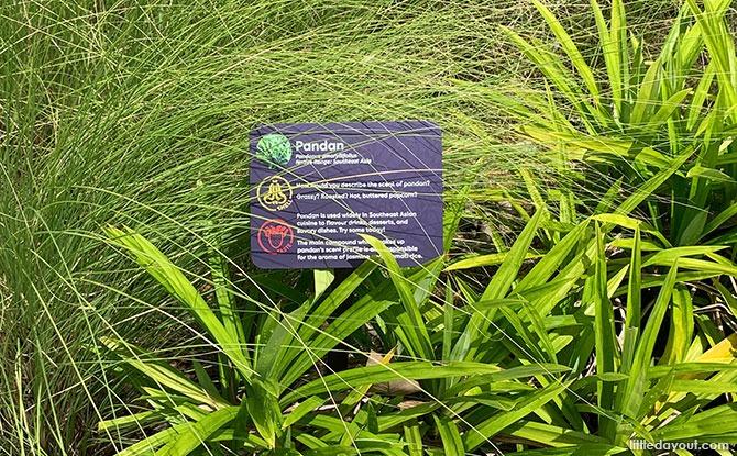 Gardens by the Bay's Sensory Trail: The 5 Senses
