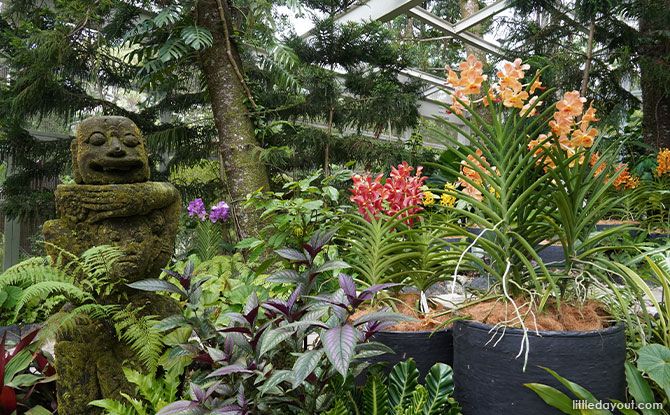 Five Orchids Not To Miss At The Tan Hoon Siang Mist House
