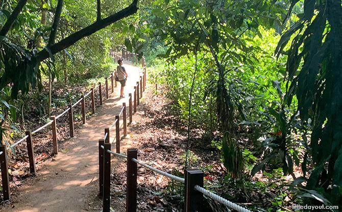 Thomson Nature Park Trail