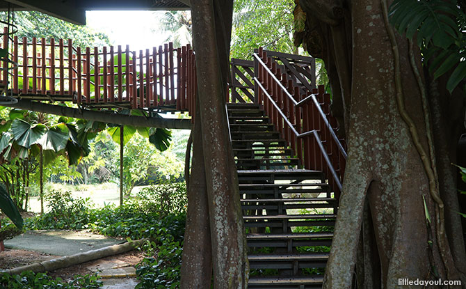 Stairs to the treehouse