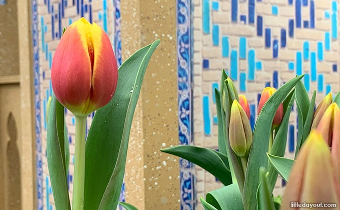 Tulipmania 2021 at Gardens by the Bay: The Origins of Tulips