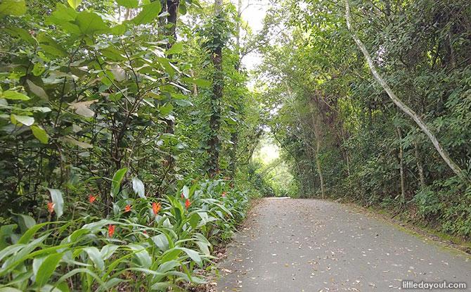 Ulu Sembawang Park Connector: Connecting Woodlands & Mandai