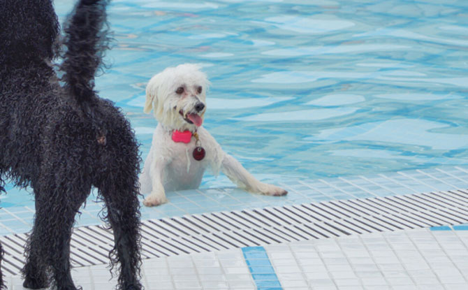 Wag and Wild - Water Park for Dogs in Singapore