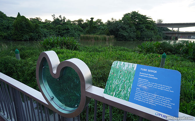 Sengkang Floating Wetland plants