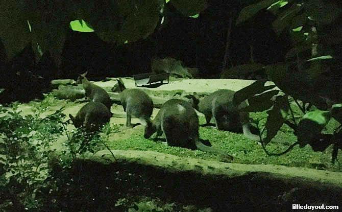 Twilight Adventures At Night Safari: Meet An Aardvark & Go On A Digital Trail