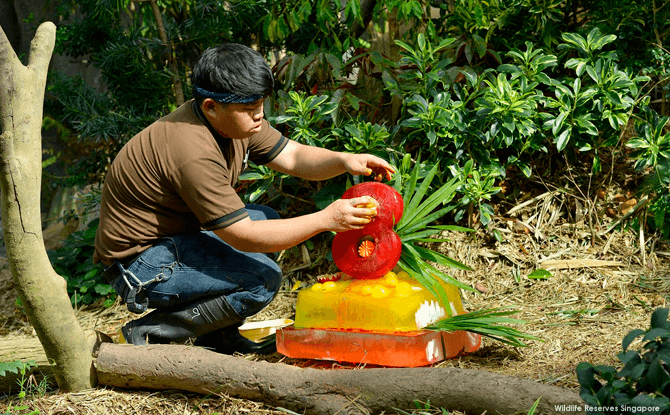 Panda keeper Ivan Ang putting the final touches on Jia Jia's ice cake