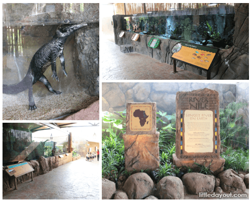 Congo River and River Nile at River Safari