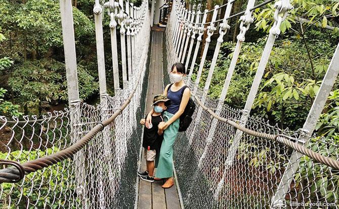 African Treetops' suspension bridges