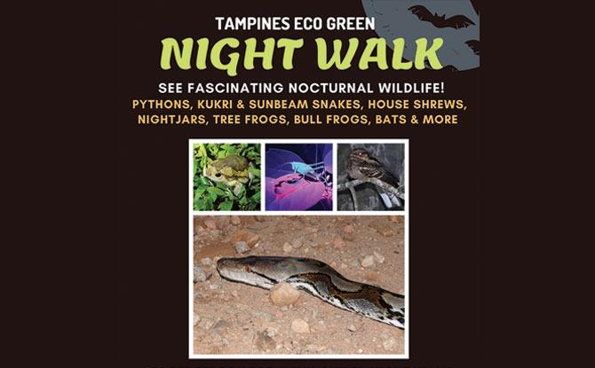 Tampines Eco Green Night Walk
