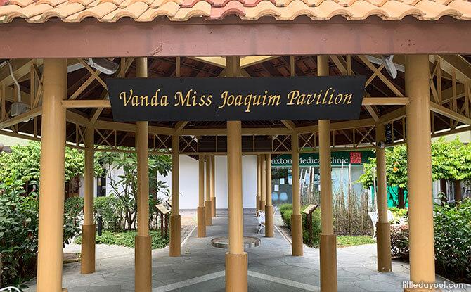 04-Vanda-Ms-Joaquim-Garden
