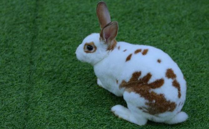 Animal Buddy Program Rusy Rabbit