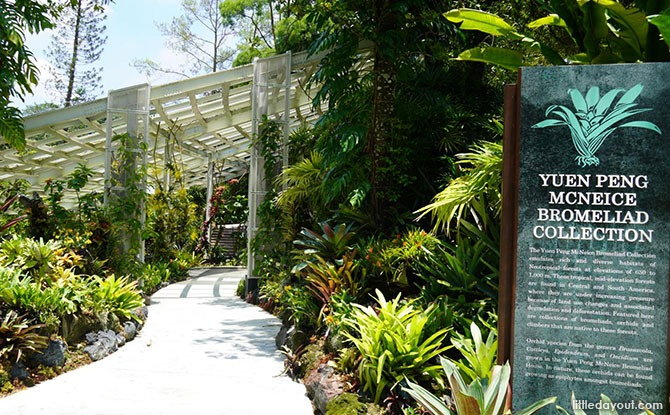 5 Interesting Things To See At The Yuen Peng McNeice Bromeliad Collection